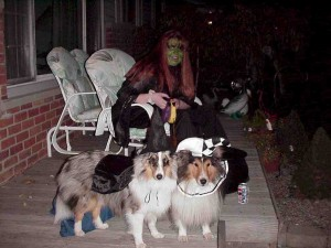 halloween with dogs